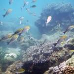 Tout savoir pour faire de la plongée au Îles Cham
