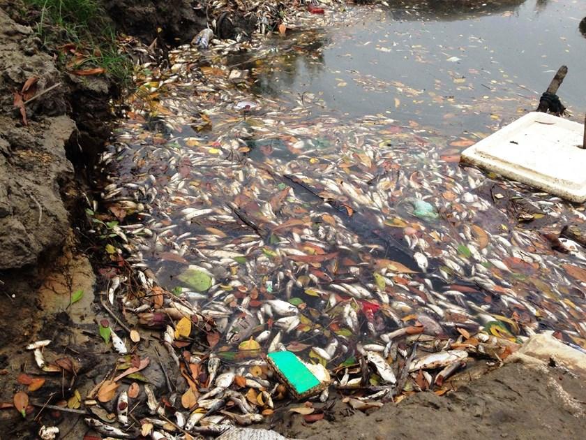 vietnam poissons morts