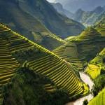 Quand Venir au Vietnam?