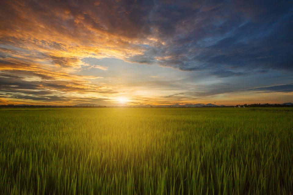rizieres hoi an