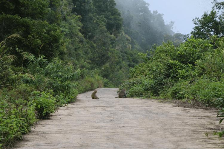 son-tra-montagne-des-singes